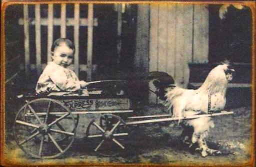 chickencart.jpg